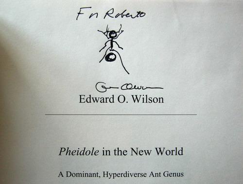Pheidole Monograph